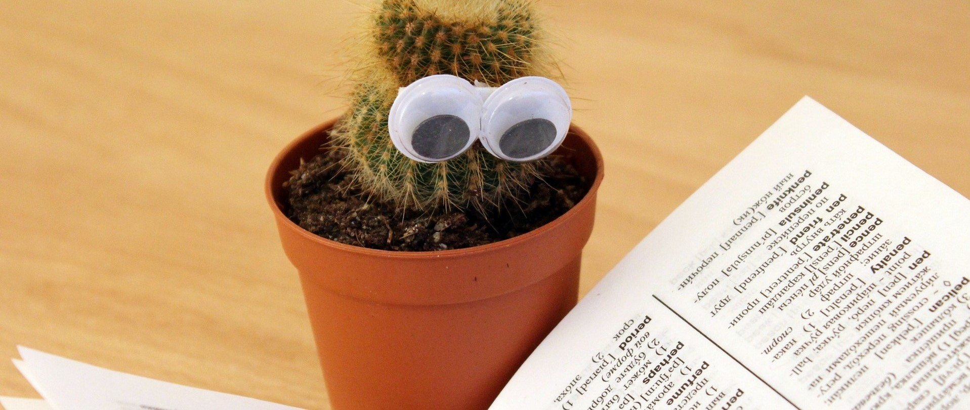 Cactus in flower pot reading Behavioral Health Terms
