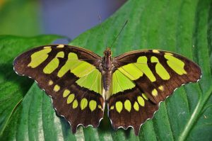 Brown and yellow butterfly on a leaf